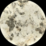 Mexican Amate Bark Marble